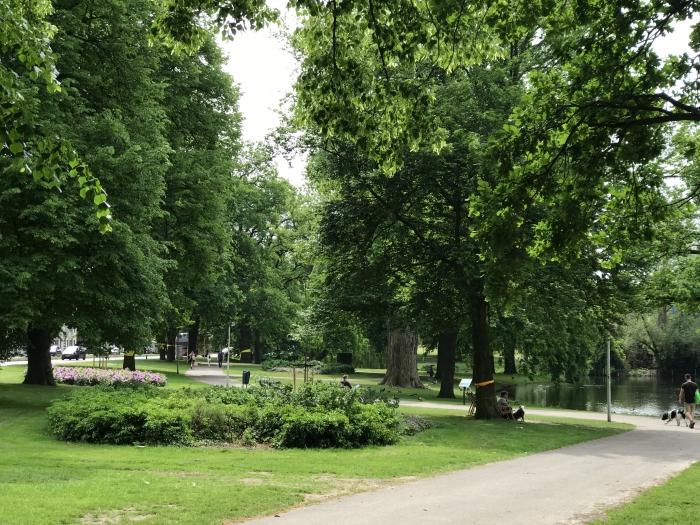 Bomenkap en het bewonersoverleg